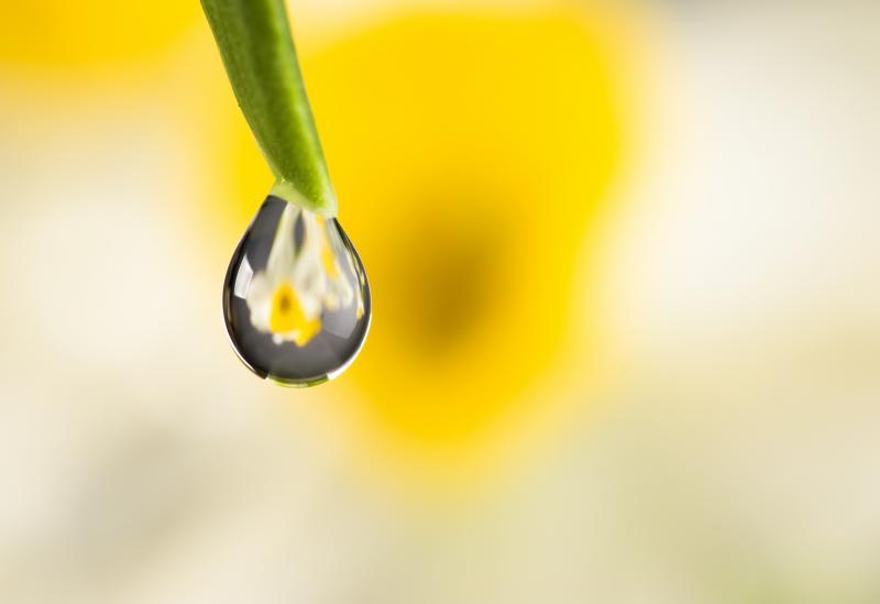 Floral para depressão