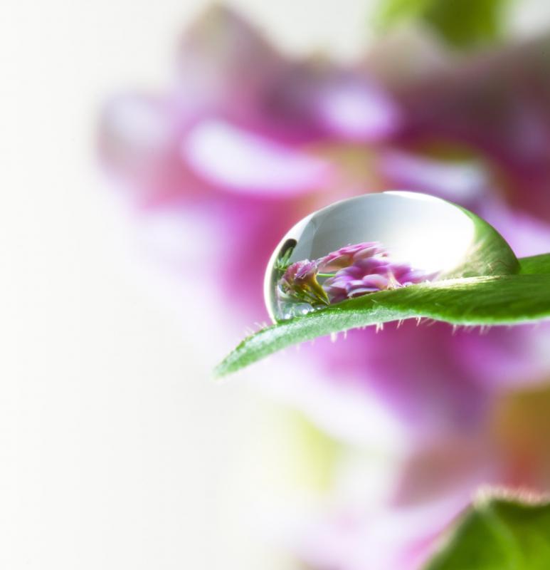 Tratamento com florais