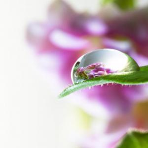 Terapeuta floral a distância