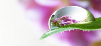 Terapia floral ansiedade